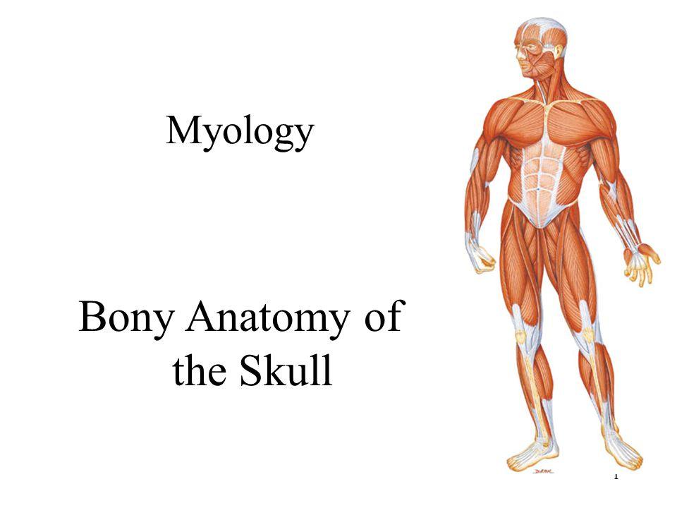 Bony Anatomy of the Skull