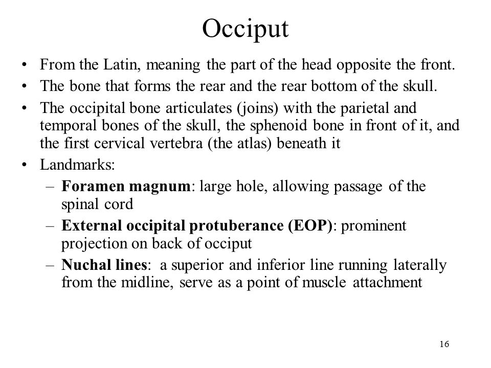 Occiput From the Latin, meaning the part of the head opposite the front. The bone that forms the rear and the rear bottom of the skull.