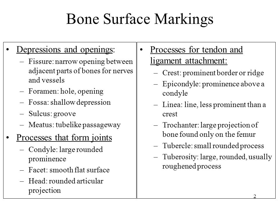 Bone Surface Markings Depressions and openings: