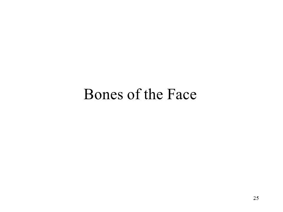 Bones of the Face
