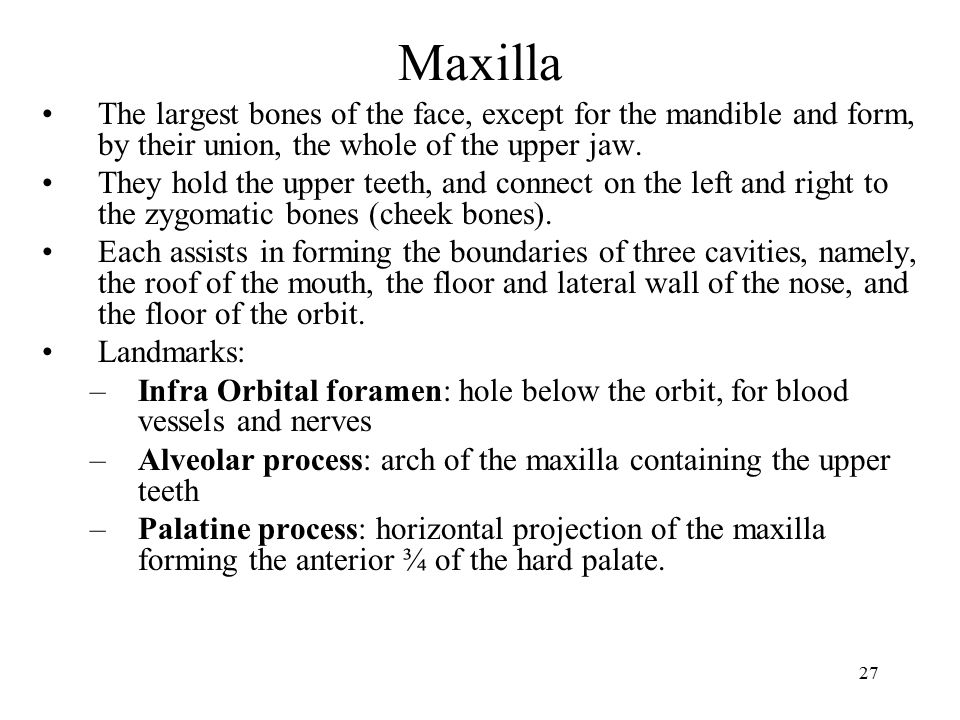 Maxilla The largest bones of the face, except for the mandible and form, by their union, the whole of the upper jaw.