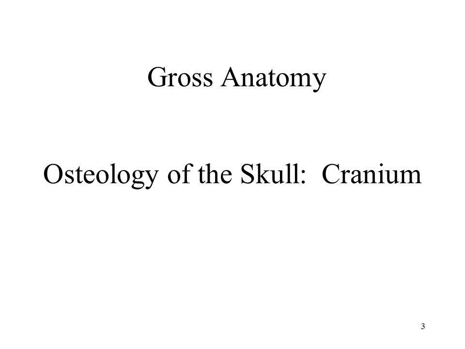 Osteology of the Skull: Cranium