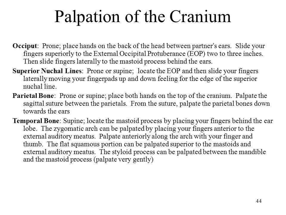 Palpation of the Cranium