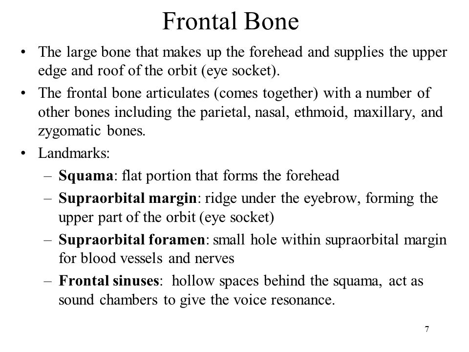 Frontal Bone The large bone that makes up the forehead and supplies the upper edge and roof of the orbit (eye socket).