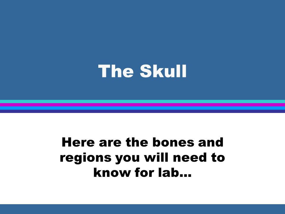 Here are the bones and regions you will need to know for lab...