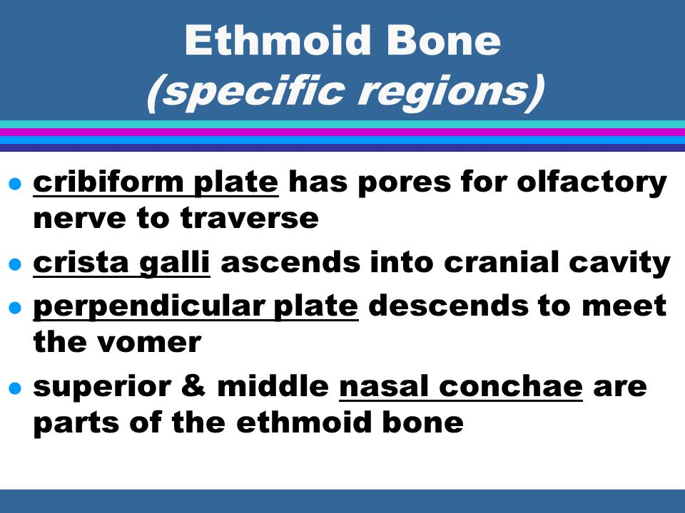 Ethmoid Bone (specific regions)
