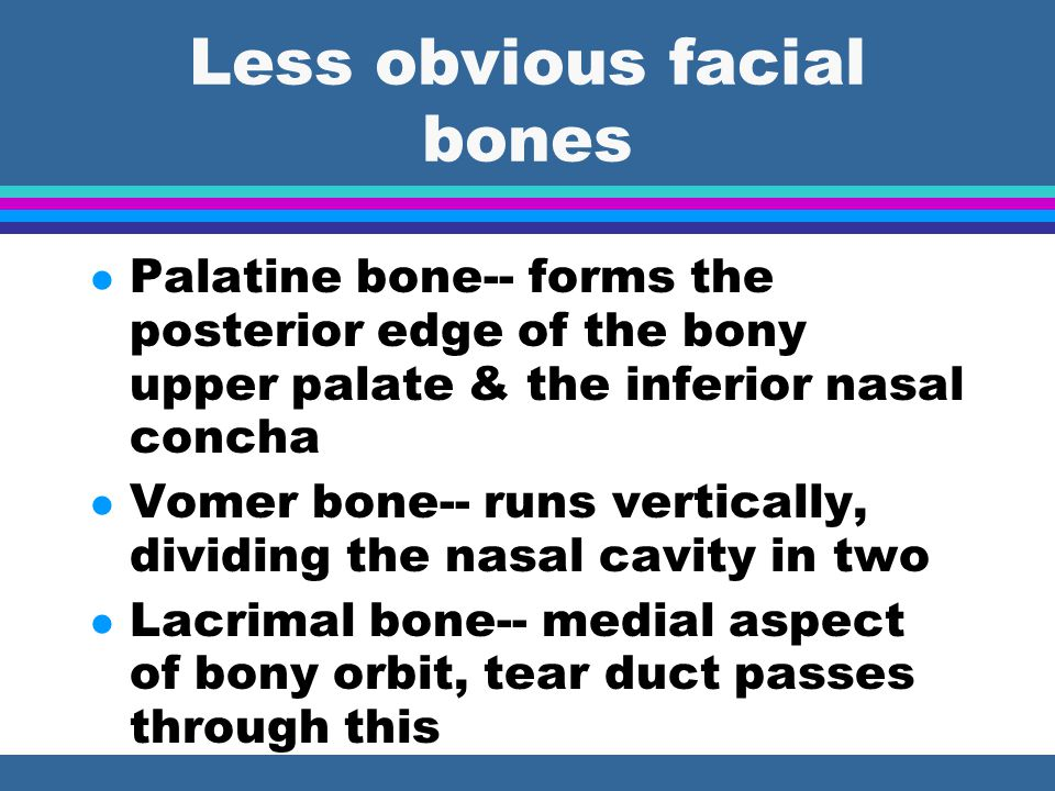 Less obvious facial bones