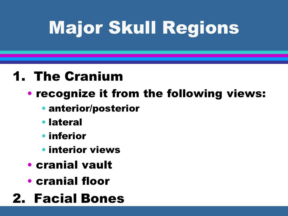 Major Skull Regions 1. The Cranium 2. Facial Bones