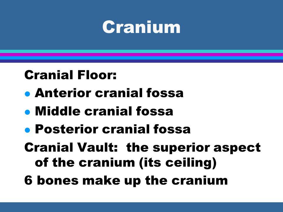 Cranium Cranial Floor: Anterior cranial fossa Middle cranial fossa