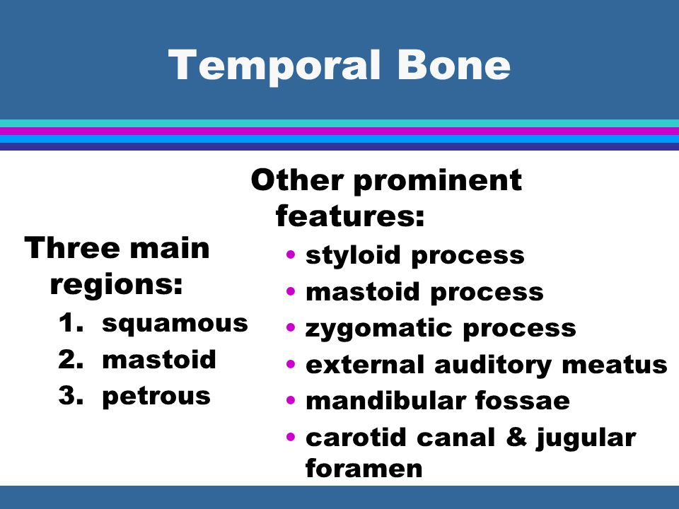 Temporal Bone Other prominent features: Three main regions: