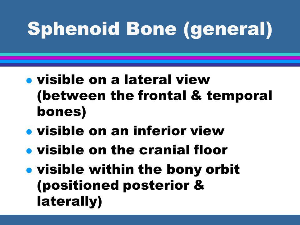 Sphenoid Bone (general)