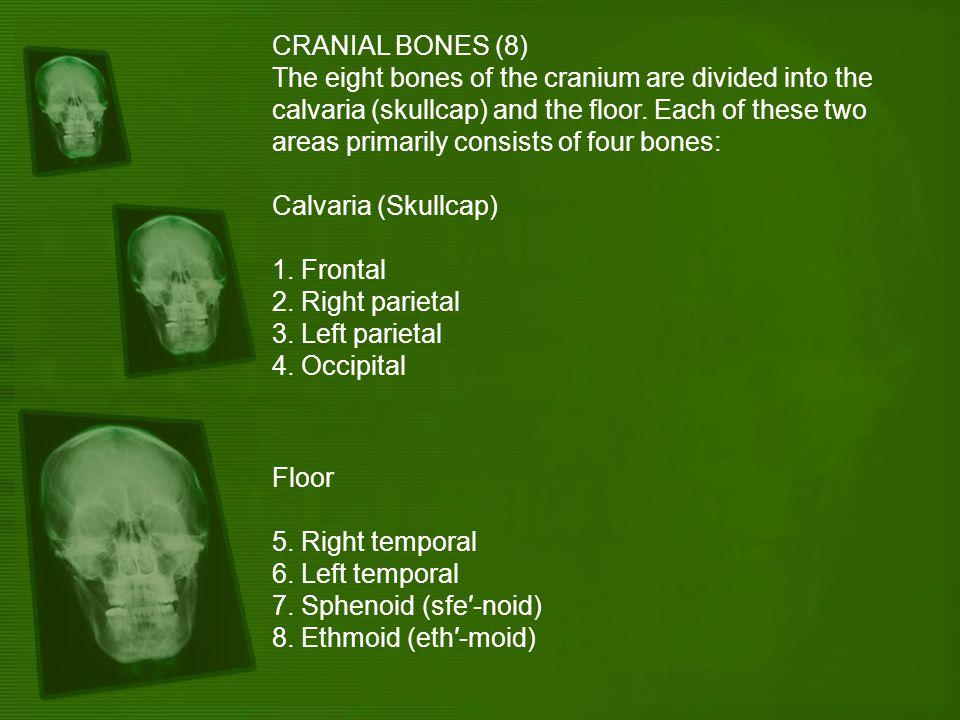 CRANIAL BONES (8)