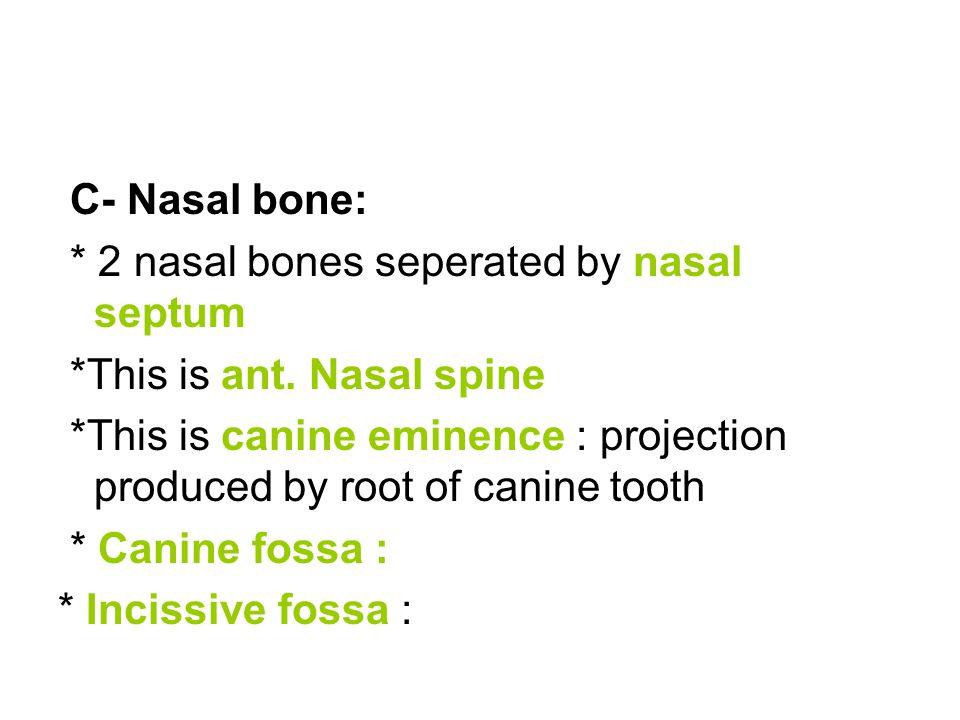 C- Nasal bone: * 2 nasal bones seperated by nasal septum. *This is ant. Nasal spine.