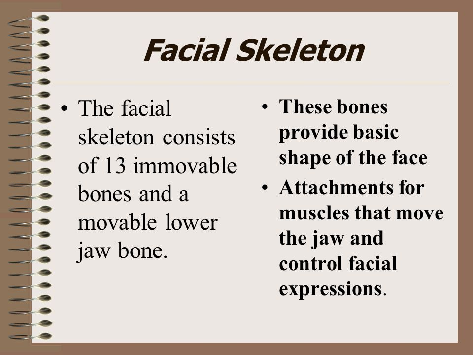 Facial Skeleton The facial skeleton consists of 13 immovable bones and a movable lower jaw bone. These bones provide basic shape of the face.