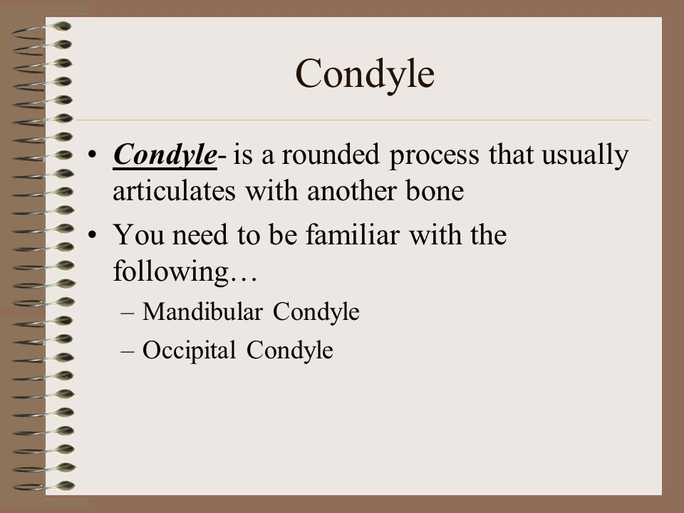 Condyle Condyle- is a rounded process that usually articulates with another bone. You need to be familiar with the following…