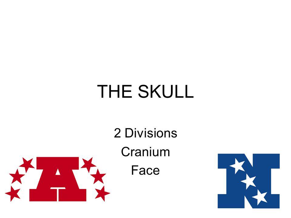 2 Divisions Cranium Face