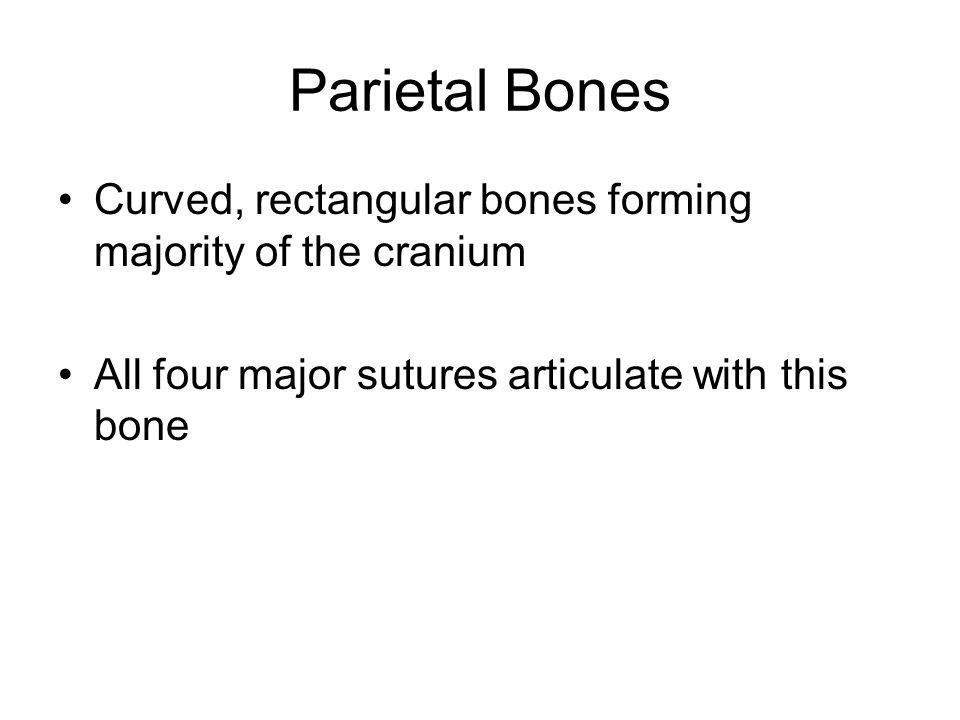 Parietal Bones Curved, rectangular bones forming majority of the cranium.