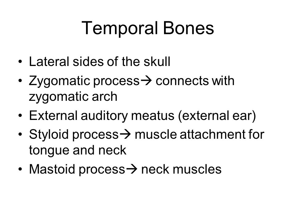 Temporal Bones Lateral sides of the skull