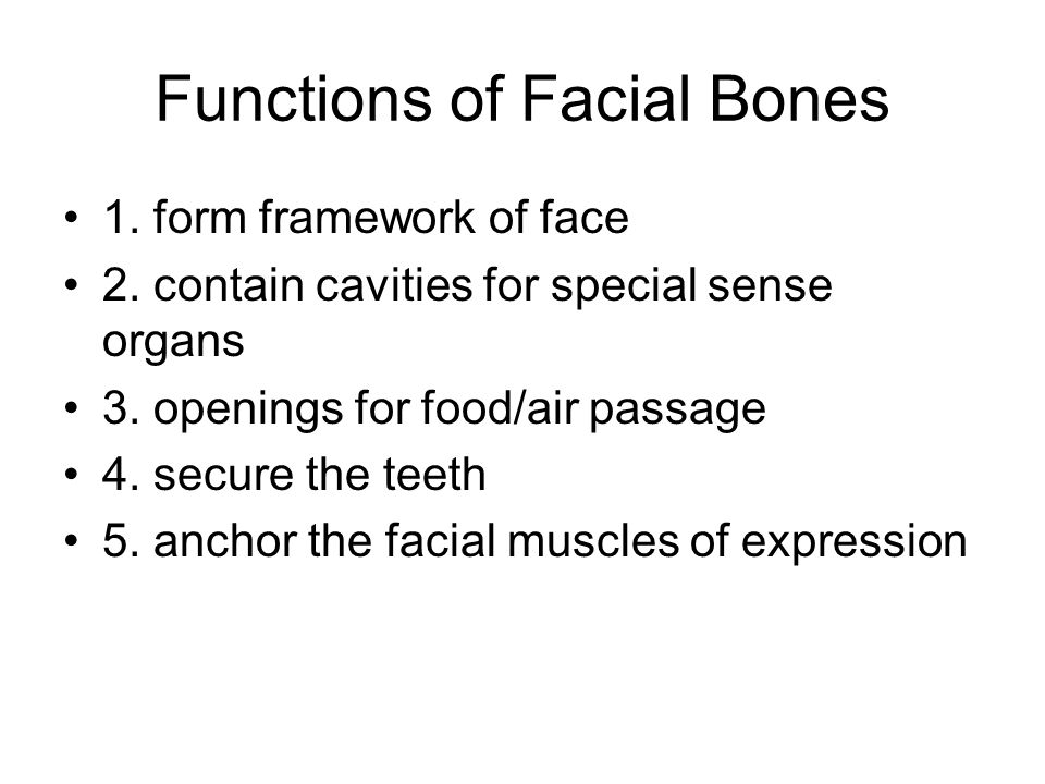 Functions of Facial Bones
