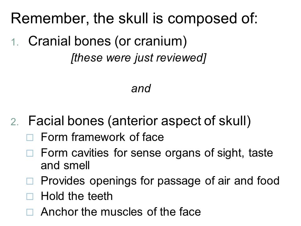 Remember, the skull is composed of: