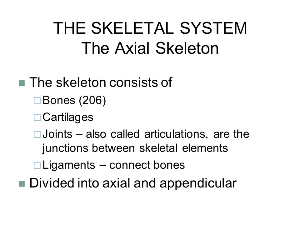 THE SKELETAL SYSTEM The Axial Skeleton