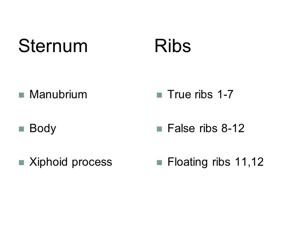 Sternum Ribs Manubrium Body Xiphoid process True ribs 1-7