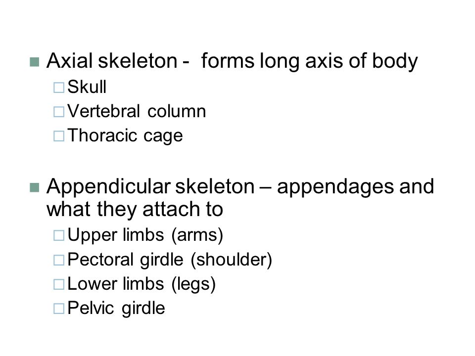Axial skeleton - forms long axis of body