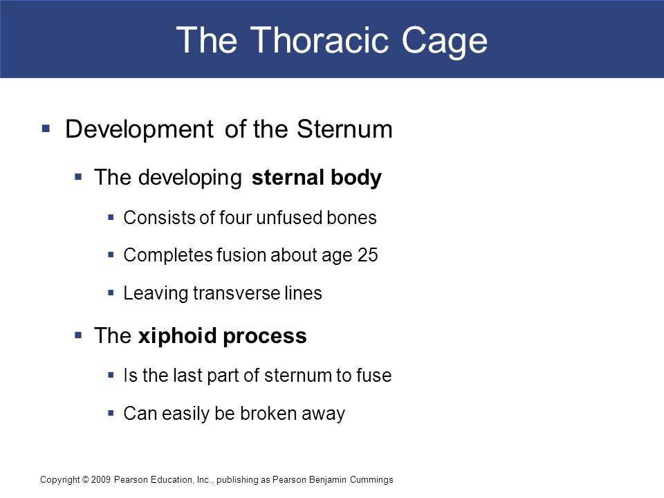 The Thoracic Cage Development of the Sternum