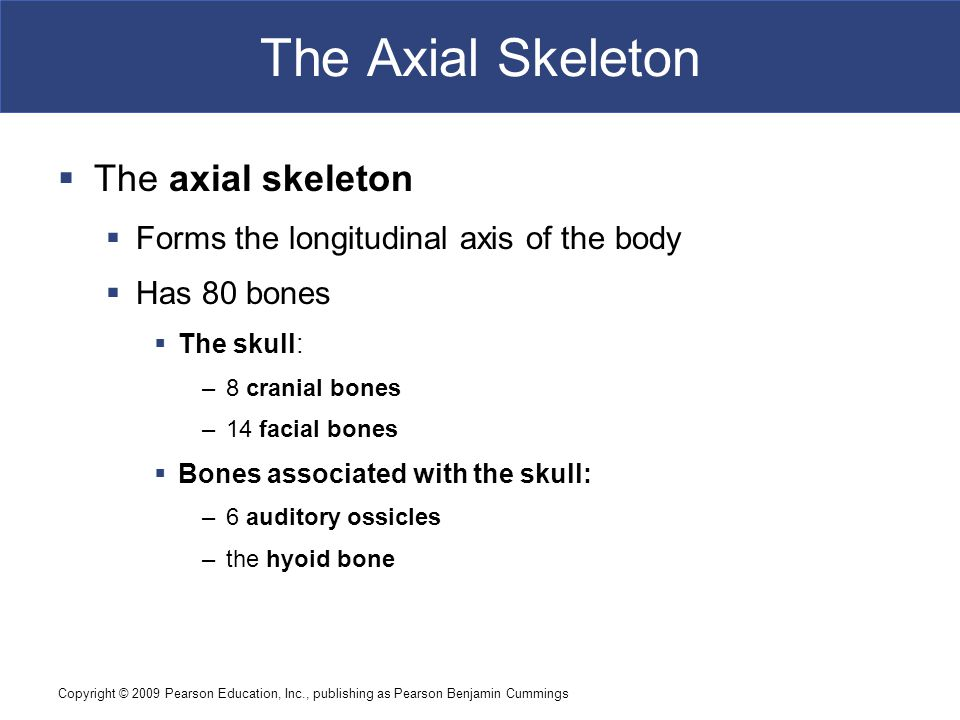 The Axial Skeleton The axial skeleton