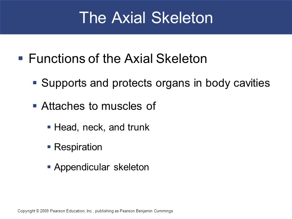 The Axial Skeleton Functions of the Axial Skeleton