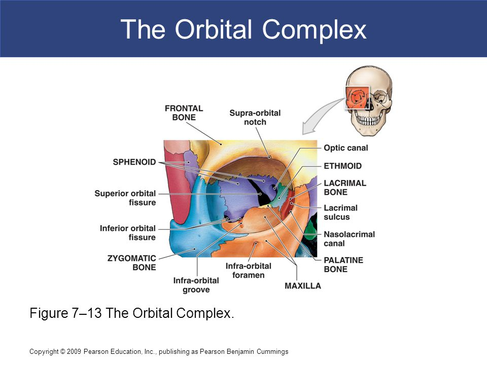The Orbital Complex Figure 7–13 The Orbital Complex.