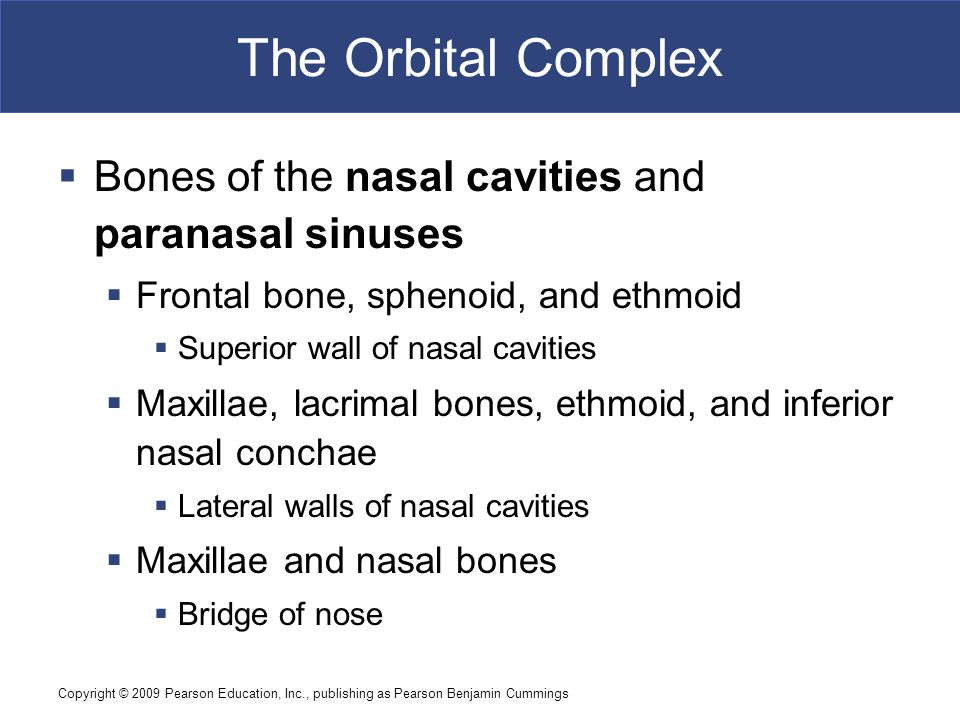 The Orbital Complex Bones of the nasal cavities and paranasal sinuses