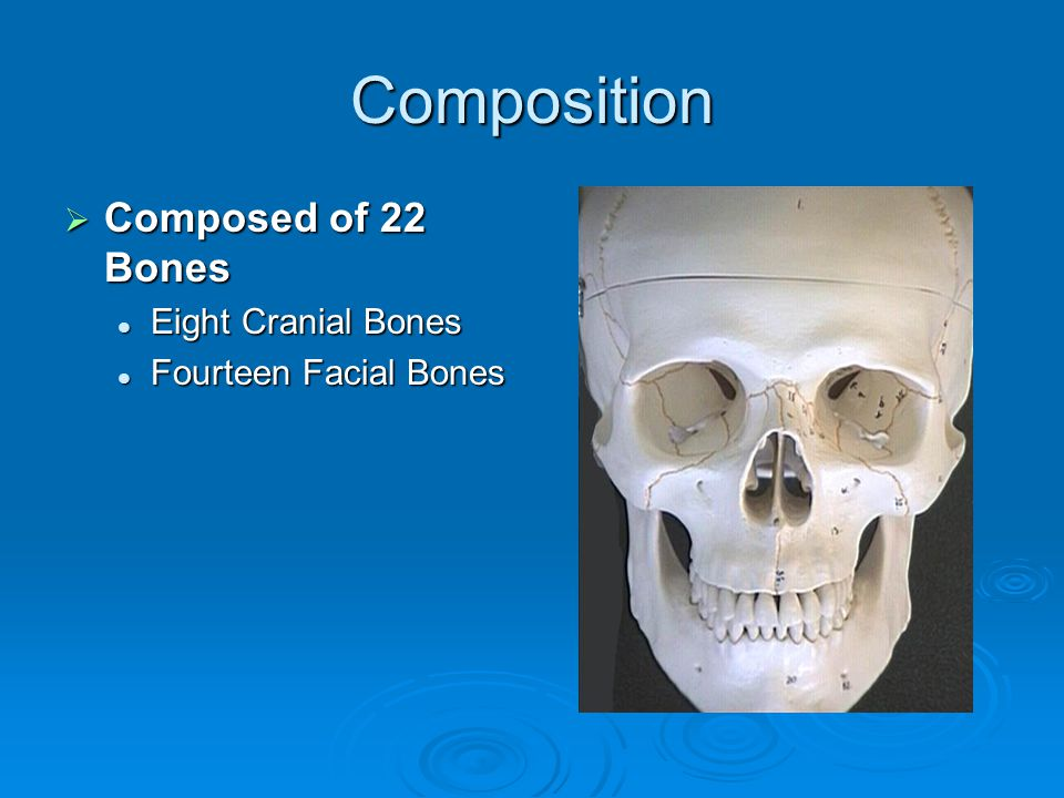 Composition Composed of 22 Bones Eight Cranial Bones