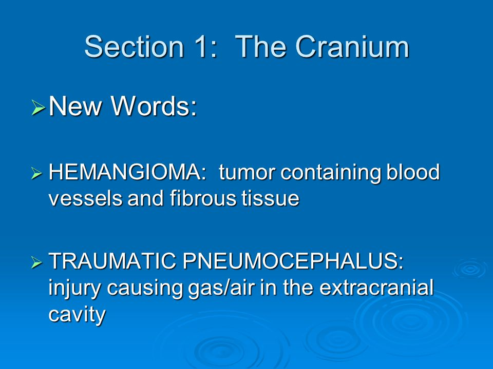 Section 1: The Cranium New Words: