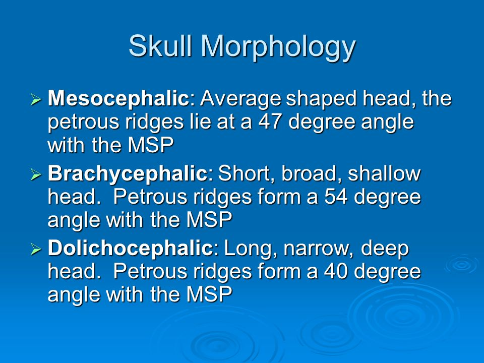 Skull Morphology Mesocephalic: Average shaped head, the petrous ridges lie at a 47 degree angle with the MSP.