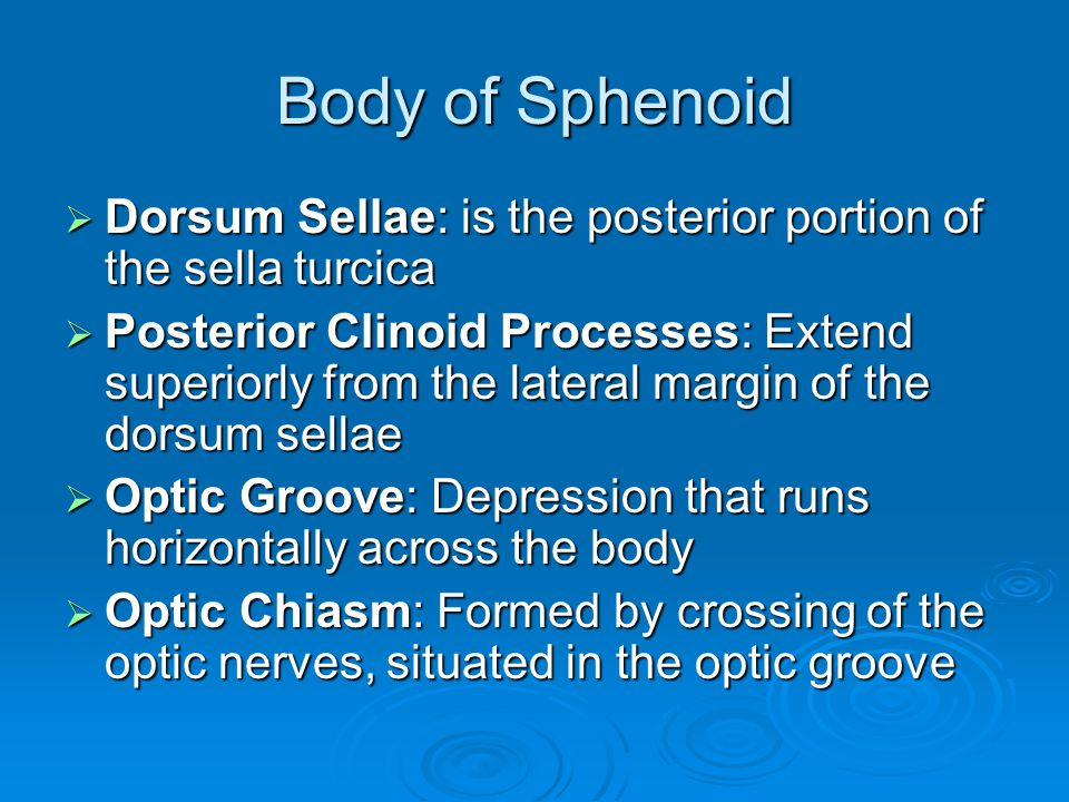 Body of Sphenoid Dorsum Sellae: is the posterior portion of the sella turcica.