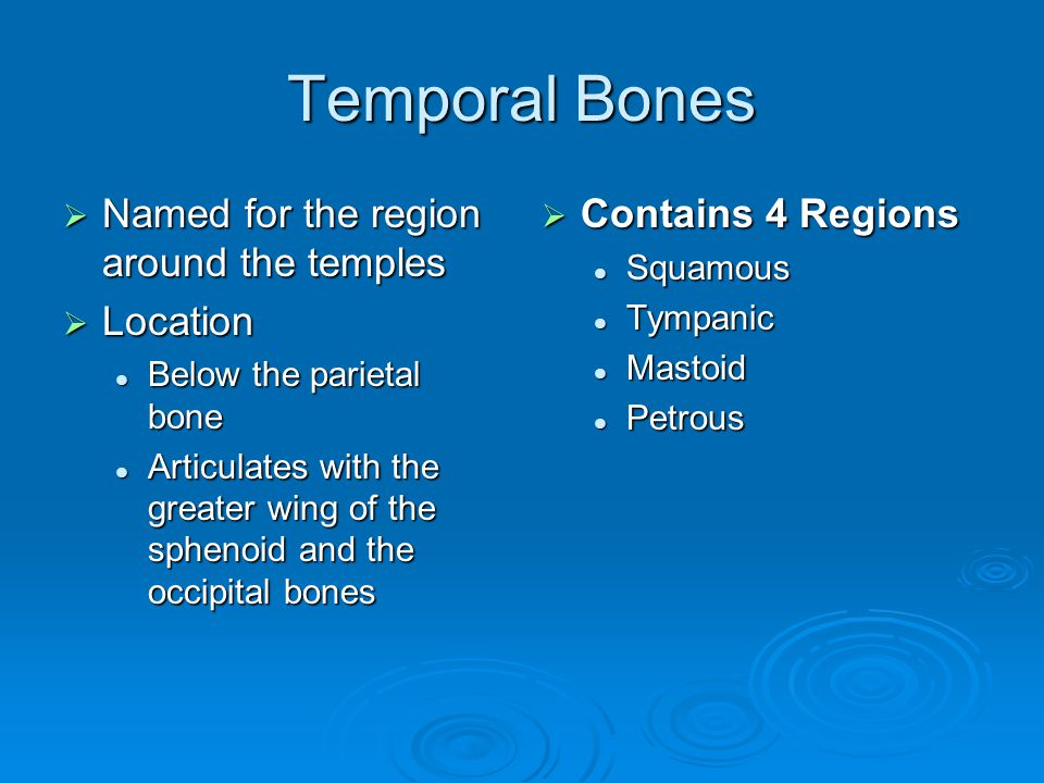 Temporal Bones Named for the region around the temples Location
