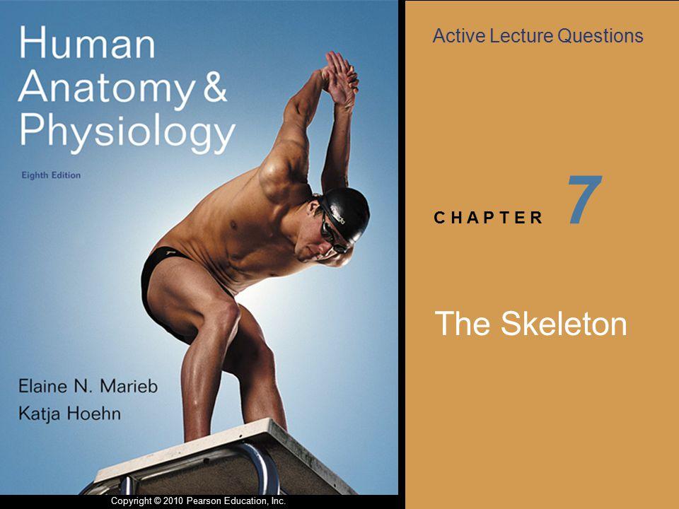 7 The Skeleton