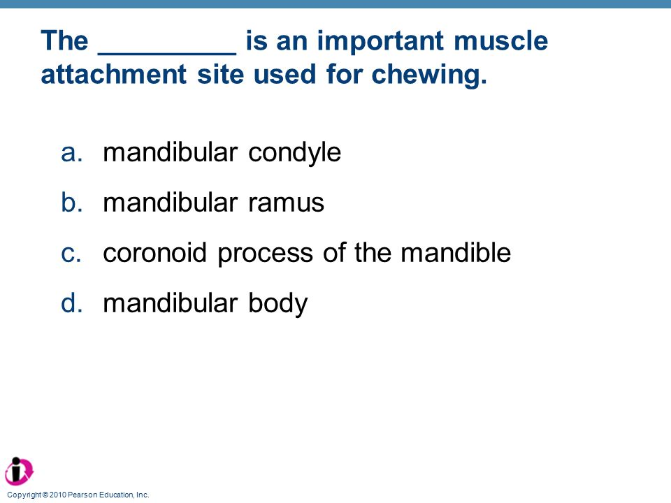 The _________ is an important muscle attachment site used for chewing.