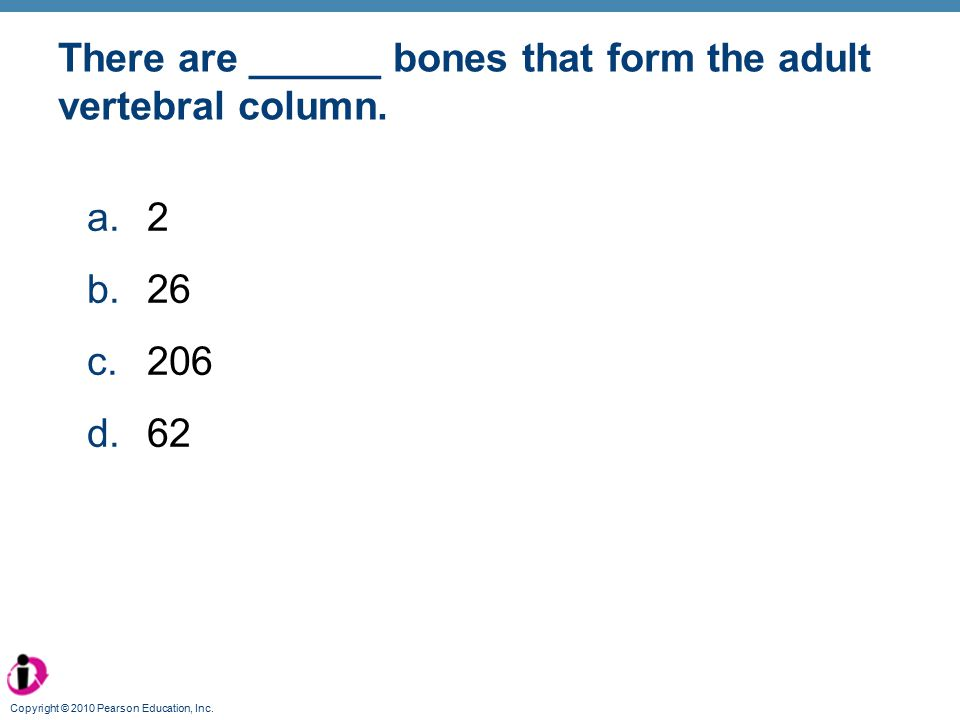 There are ______ bones that form the adult vertebral column.