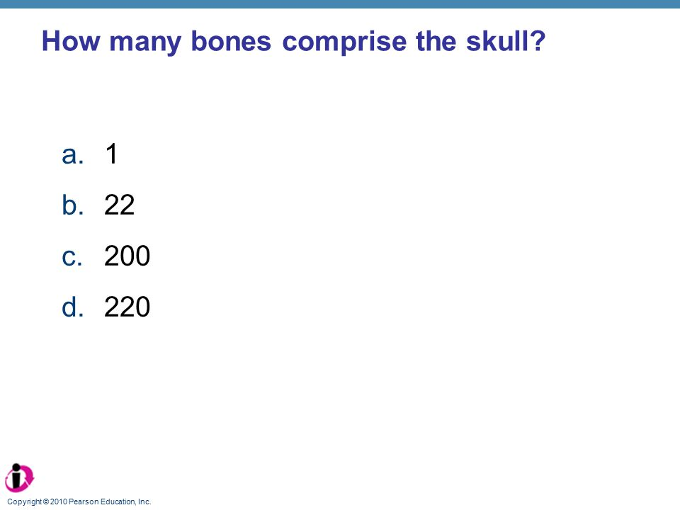 How many bones comprise the skull