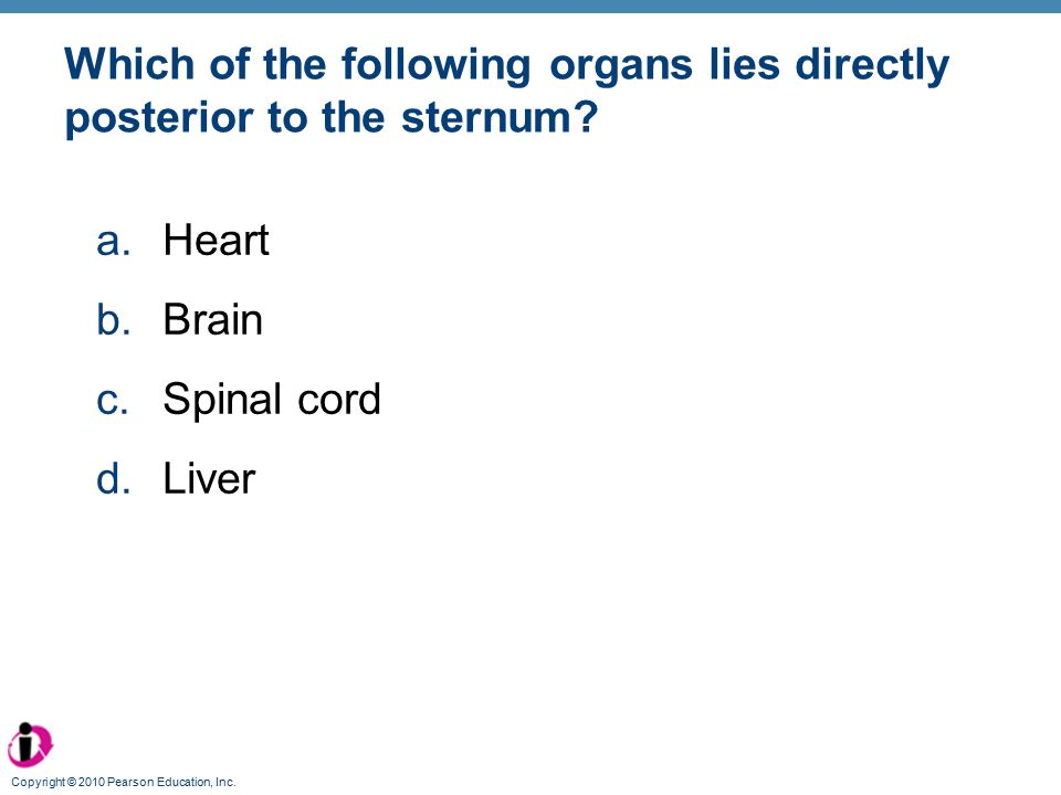 Which of the following organs lies directly posterior to the sternum