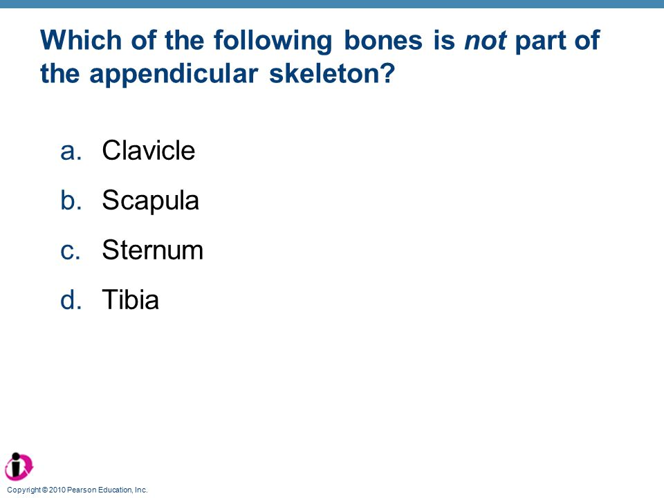 Which of the following bones is not part of the appendicular skeleton