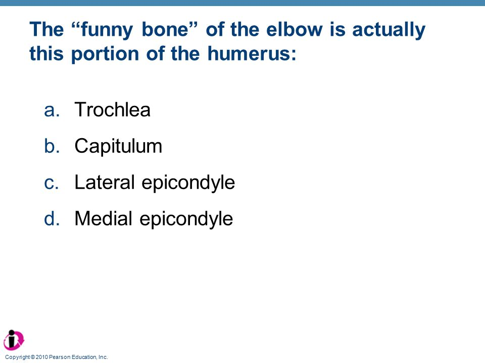 The funny bone of the elbow is actually this portion of the humerus: