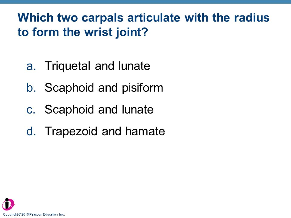 Which two carpals articulate with the radius to form the wrist joint