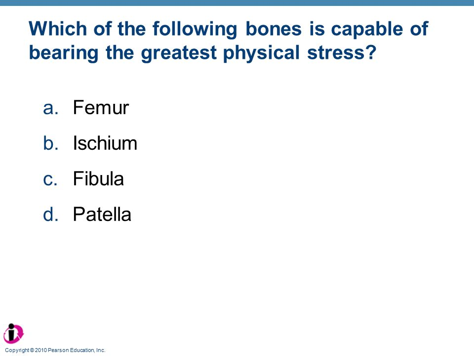 Which of the following bones is capable of bearing the greatest physical stress