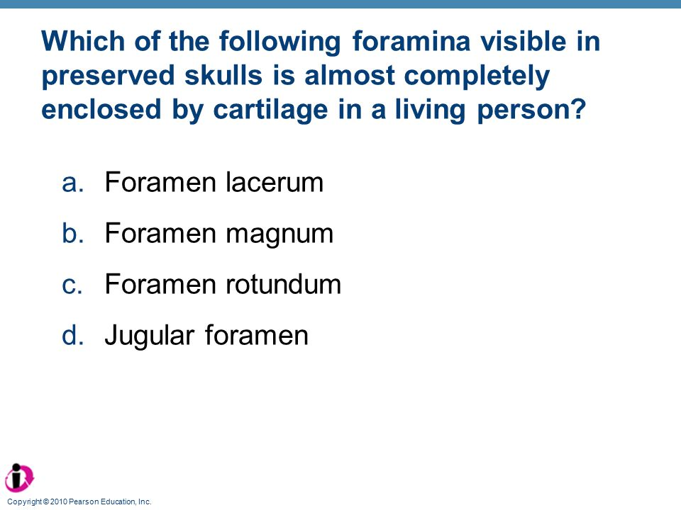 Which of the following foramina visible in preserved skulls is almost completely enclosed by cartilage in a living person