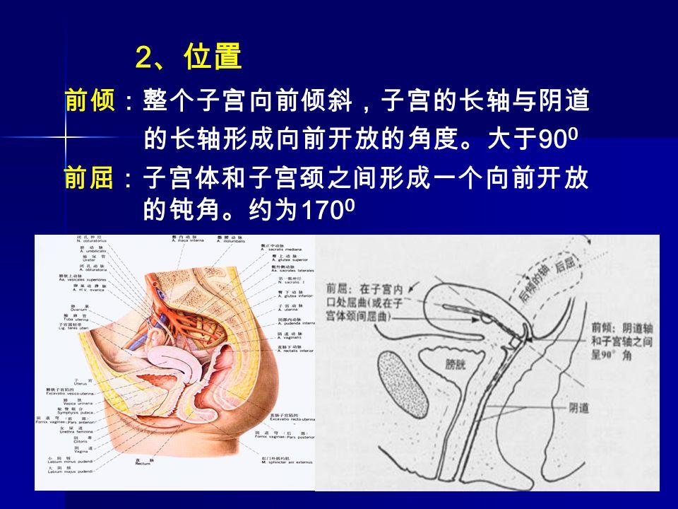 2、位置 前倾:整个子宫向前倾斜,子宫的长轴与阴道的长轴形成向前开放的角度。大于900