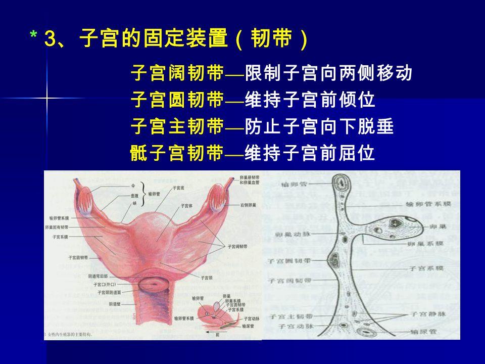 * 3、子宫的固定装置(韧带) 子宫阔韧带—限制子宫向两侧移动 子宫圆韧带—维持子宫前倾位 子宫主韧带—防止子宫向下脱垂