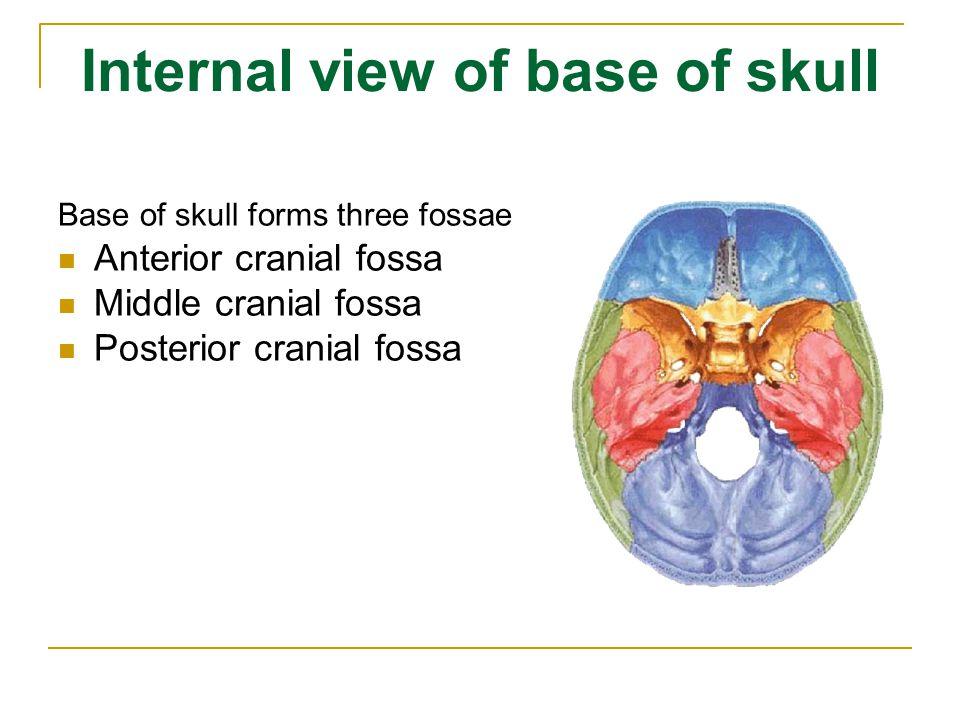 Internal view of base of skull